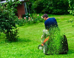 Expert Organic Lawn Care in NW10